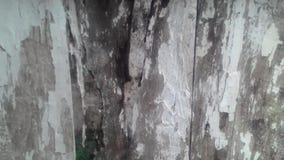 Sembler du bois de vintage de mur grand banque de vidéos