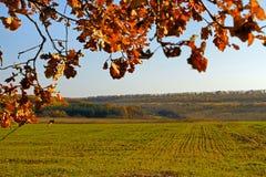 Sembrado con el campo de trigo de invierno. Estación del otoño Imágenes de archivo libres de regalías