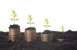 Sembrando la planta siembre el crecimiento en la pila de dinero de las monedas fotografía de archivo libre de regalías