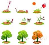 Sembrando los árboles fijados Imagen de archivo libre de regalías