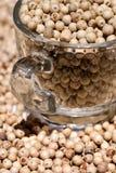 Seme 03 dei peperoni Fotografia Stock