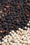 Seme 04 dei peperoni Fotografia Stock