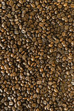 Seme arrostito caffè Fotografia Stock Libera da Diritti