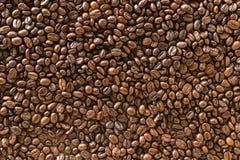 Seme arrostito caffè Immagine Stock Libera da Diritti