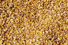Seme del cereale Fotografia Stock Libera da Diritti