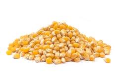 Seme del cereale di schiocco isolato Fotografia Stock Libera da Diritti