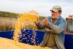 Seme del cereale a disposizione dell'agricoltore Fotografia Stock