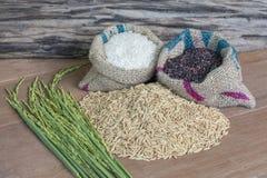 Seme del riso Fotografie Stock Libere da Diritti
