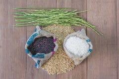 Seme del riso Fotografie Stock