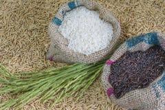 Seme del riso Fotografia Stock