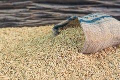 Seme del riso Immagine Stock Libera da Diritti