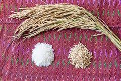 Seme del riso di agricoltura Fotografia Stock