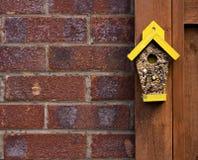 Seme dell'uccello sotto forma di una casa Immagine Stock Libera da Diritti