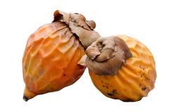Seme della palma da olio Immagine Stock