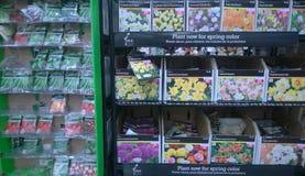 Seme della pianta sugli scaffali Fotografia Stock