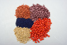 Seme della semina Immagini Stock
