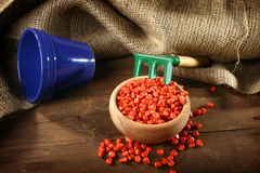 Seme della semina del cereale Fotografia Stock Libera da Diritti