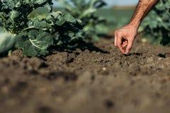 Seme della semina dell'agricoltore Fotografia Stock Libera da Diritti