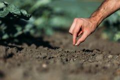 Seme della semina dell'agricoltore Fotografia Stock
