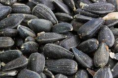 Seme di girasole nero Immagini Stock Libere da Diritti