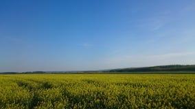 Seme di ravizzone e cielo blu gialli Immagini Stock Libere da Diritti