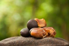 Seme di Siam Rose Wood fotografie stock libere da diritti