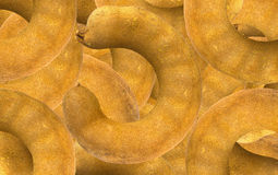 Seme dorato del tamarindo Fotografie Stock