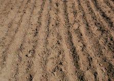 Seme e fertilizzante del fagiolo Immagini Stock