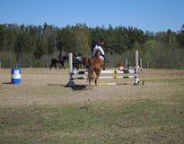 Seme/Letonia - 1 de mayo de 2018: El jinete en caballo salta sobre barreras en competencias en el salto Fotografía de archivo libre de regalías