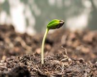 Seme su suolo fotografie stock libere da diritti