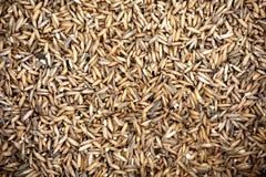 Seme tailandese del riso Immagini Stock