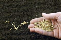 Semeando as sementes Imagens de Stock
