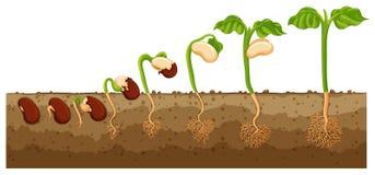 Semeie o crescimento na árvore ilustração stock