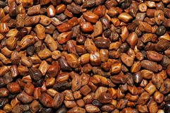 Semen Cassia Seeds Stock Photo
