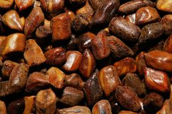 Semen Cassia Seeds. Chinese traditional medicine, dry semen cassia seeds, macro 1:1 royalty free stock image