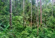 Semenggoh naturreserv Royaltyfria Bilder