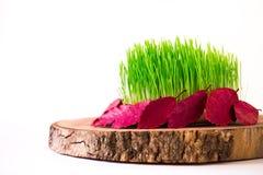 Semeni auf der Weinleseplatte, verziert mit roter Schnur auf nationaler Arttischdecke Lizenzfreies Stockbild