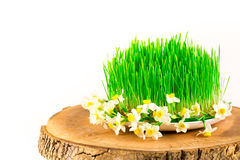 Semeni vert sur le tronçon en bois, décoré des jonquilles minuscules Photo stock