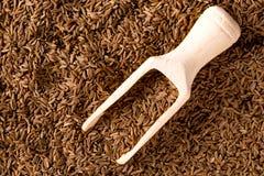 Semente de alcaravia com pá da especiaria Fotos de Stock