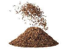 Semente de alcaravia no movimento isolada no fundo branco Fotografia de Stock Royalty Free