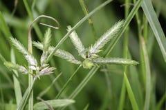 Semente do broto e folha verde Planta nova do bebê fresco que cresce na luz solar natural exterior no ambiente do campo do jardim fotografia de stock