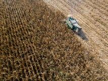 Semente dos campos, ideia aérea da colheita da ceifeira de liga de um campo com uma ceifeira de liga com o cornhusker que recolhe imagem de stock