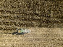 Semente dos campos, ideia aérea da colheita da ceifeira de liga de um campo com uma ceifeira de liga com o cornhusker que recolhe Imagens de Stock