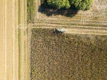 Semente dos campos, ideia aérea da colheita da ceifeira de liga de um campo com uma ceifeira de liga com o cornhusker que recolhe Foto de Stock