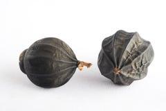A semente voada Imagem de Stock Royalty Free