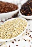Sementes crus do quinoa de espécies diferentes Imagem de Stock