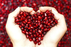 Sementes da romã que dão forma ao coração nas mãos Fotos de Stock
