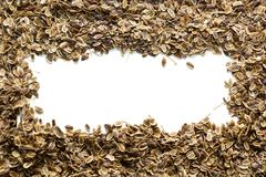 Sementes de aneto orgânicas secas, espaço para o texto fotografia de stock royalty free