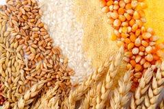Sementes de cereal e orelhas do trigo Imagens de Stock Royalty Free