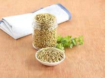 Sementes de coentro saudáveis do alimento em uma bacia Imagens de Stock Royalty Free
